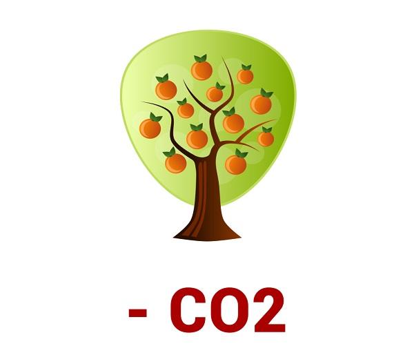 Glli alberi assorbono CO2